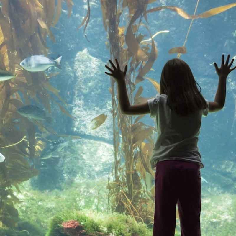 Oroscopo Naturale Acquario