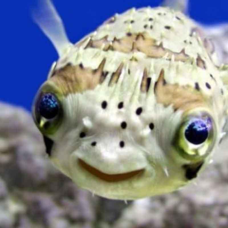 Oroscopo Naturale Pesci