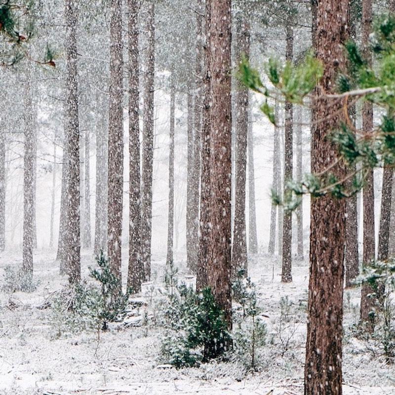 Oroscopo Naturale Dicembre